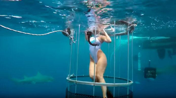 Porno z rekinami