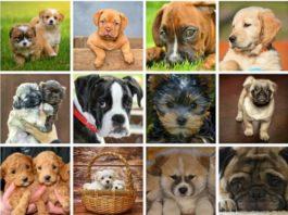 Psy. Ciekawostki na temat psów