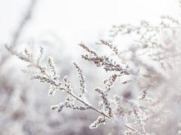 Zima i Boże Narodzenie