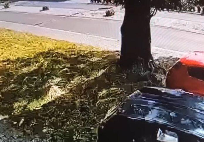 drzewo, samochód