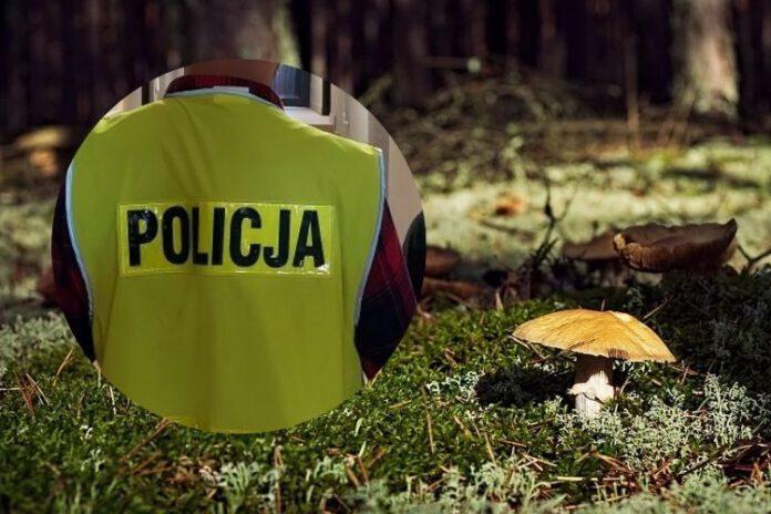 Gdzie są grzyby odkrycie